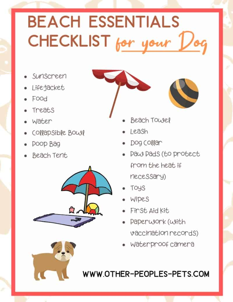 Beach Essentials for Dogs You Don't Want to Forget