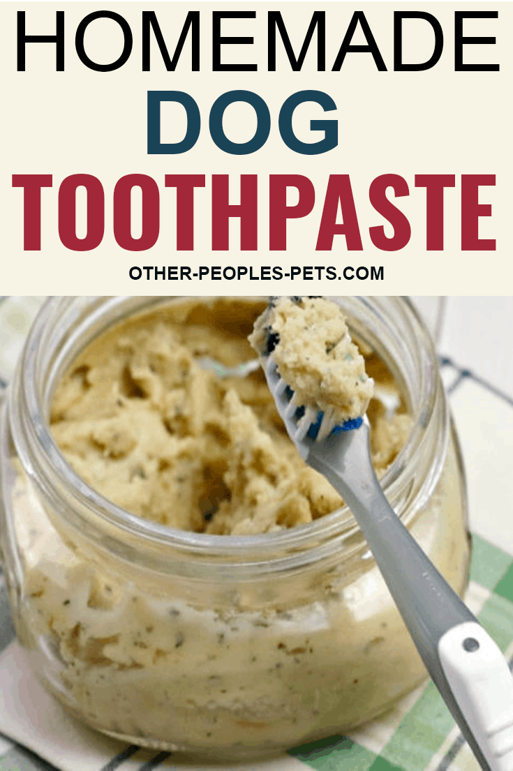 If you've been looking for a homemade dog toothpaste your dog will let you brush his teeth with, this is it. Try this easy recipe today.